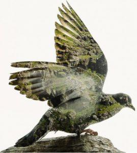 Vrij als een vogel met VPN